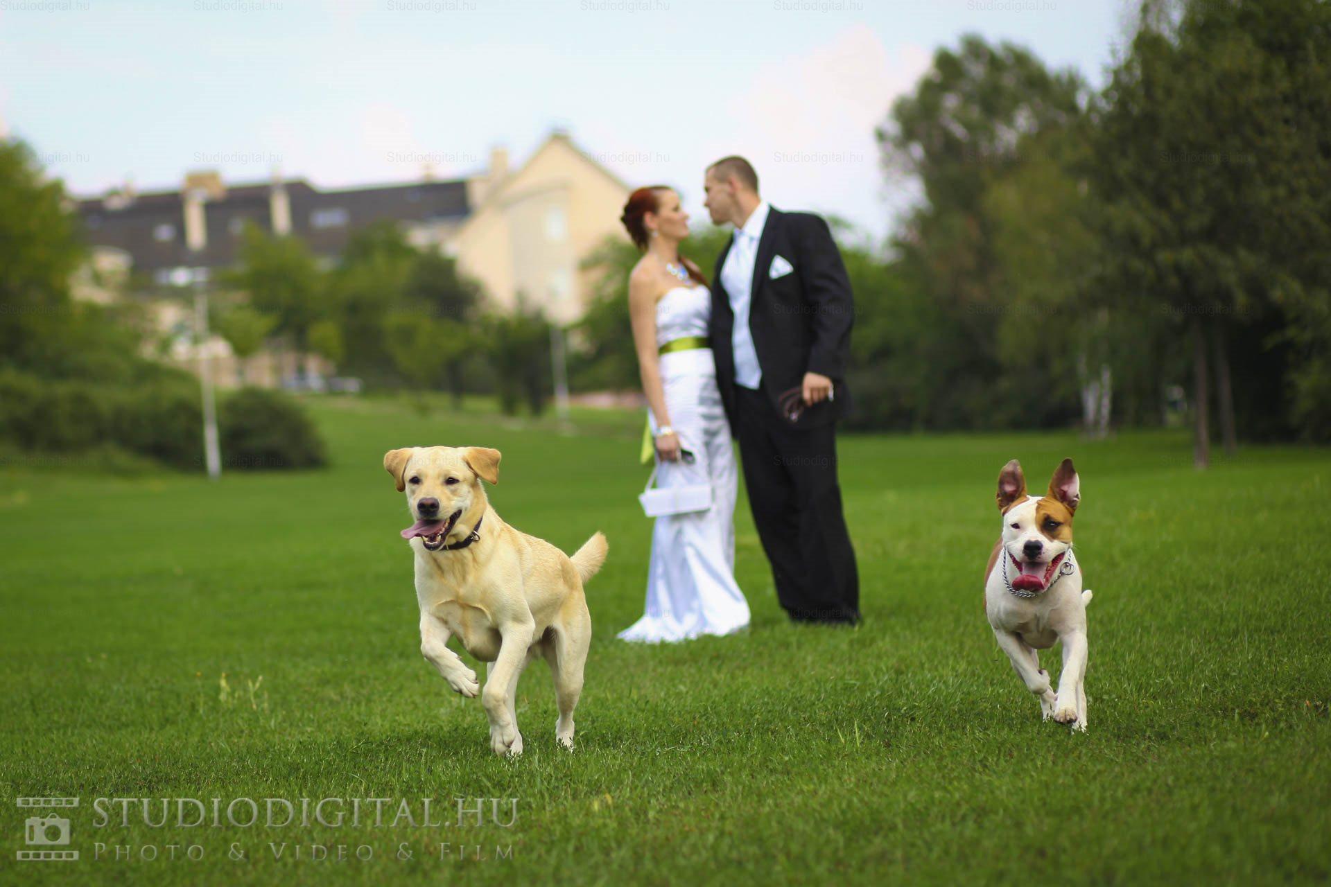 Kreatív-esküvői-fotó-25